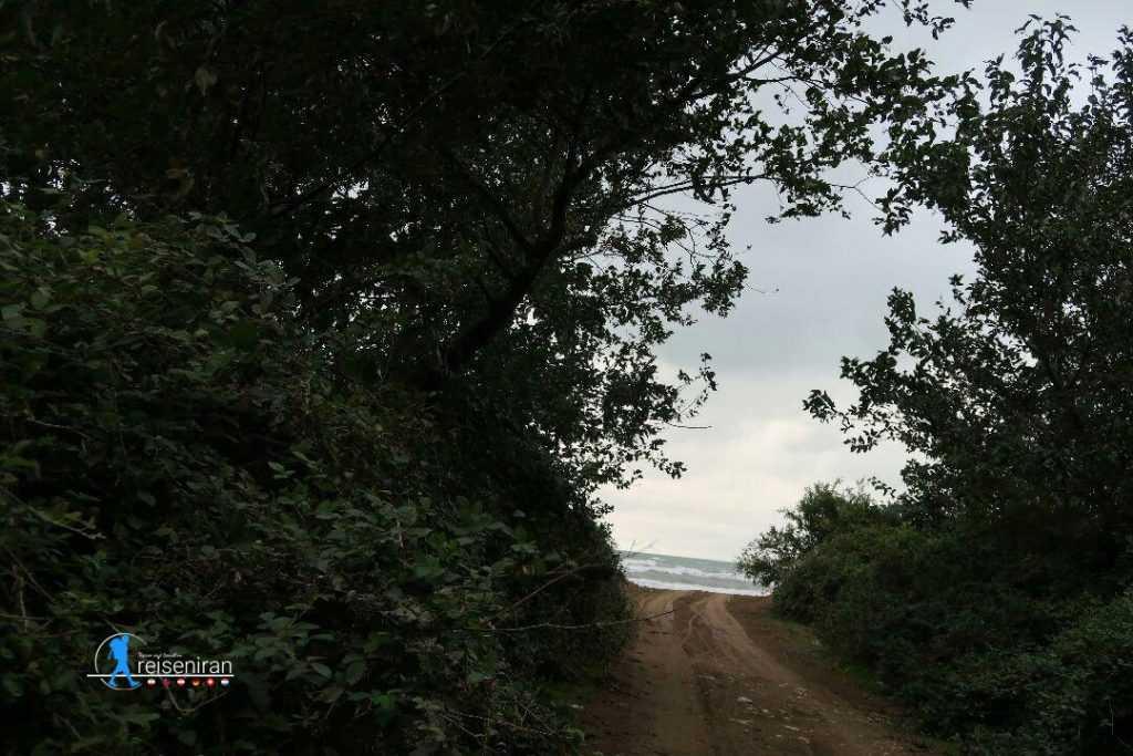 ساحل میانکاله