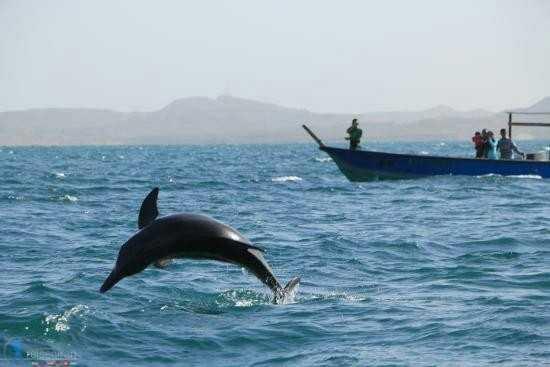 دلفین جزیره هنگام