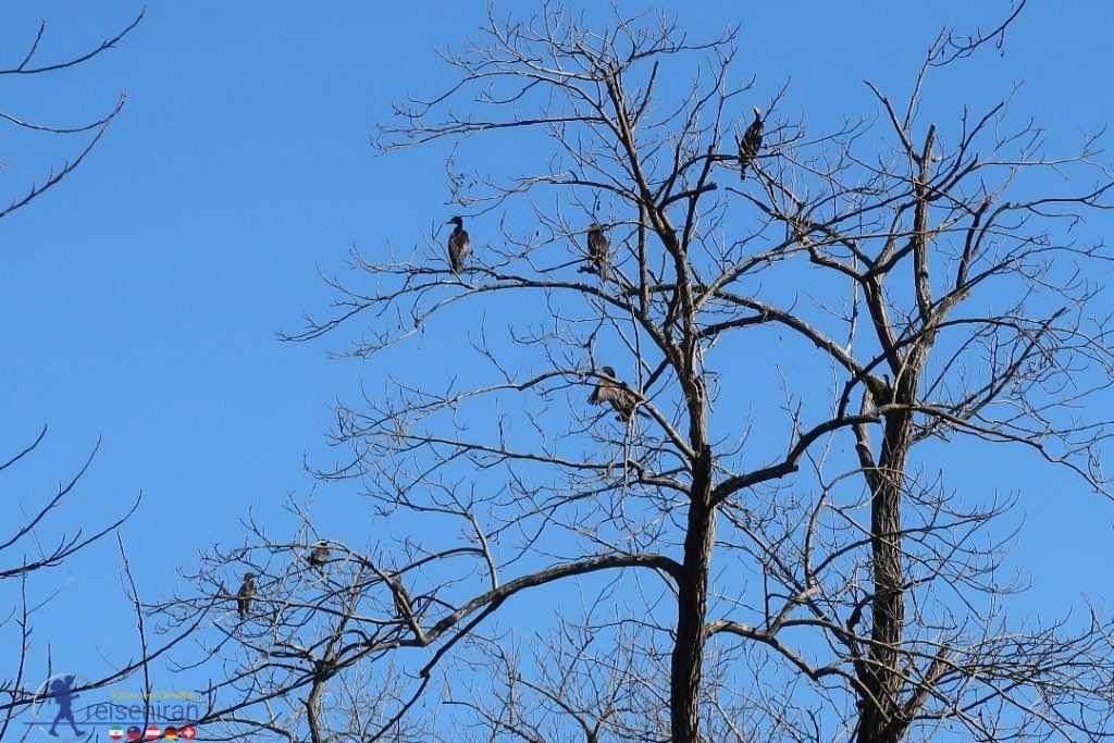 پرندگان مهاجر در اطراف دریاچه حلیمه جان