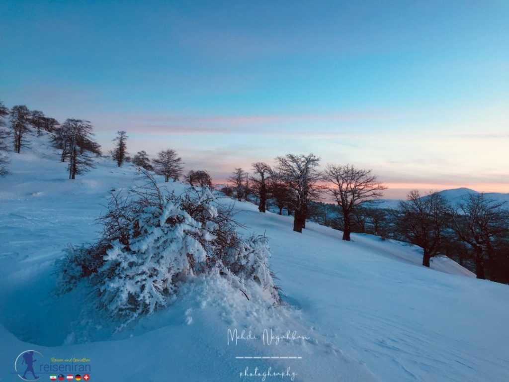 جنگل ابر در زمستان