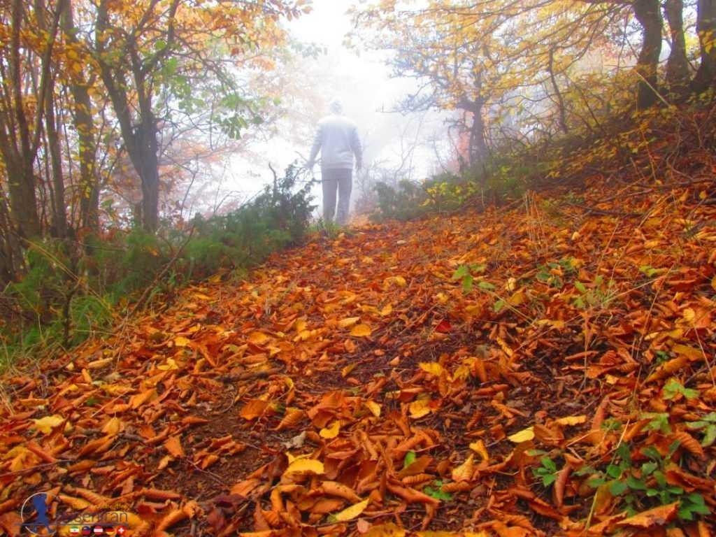 محیط رویایی جنگل ابر