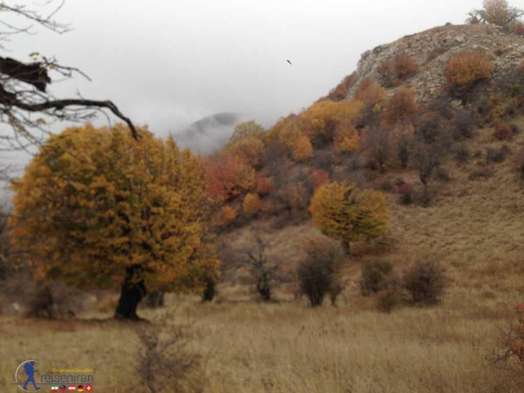 جنگل ابر در پاییز