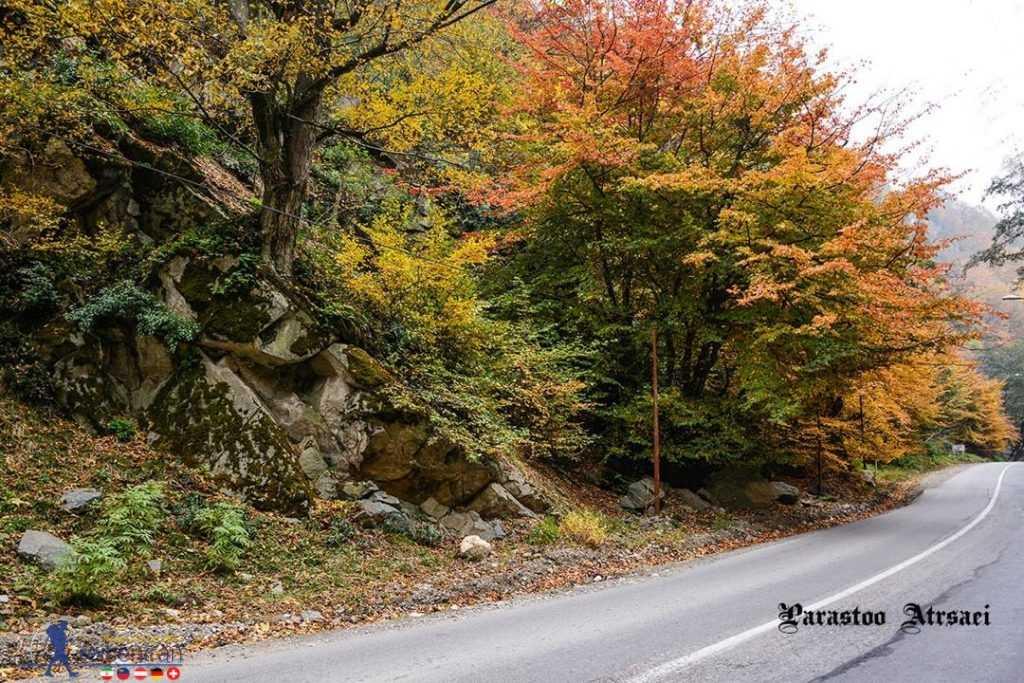 جاده پاییزی جنگل ناهارخوران