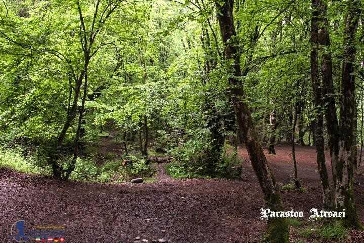 جنگل ناهار خوران تابستان