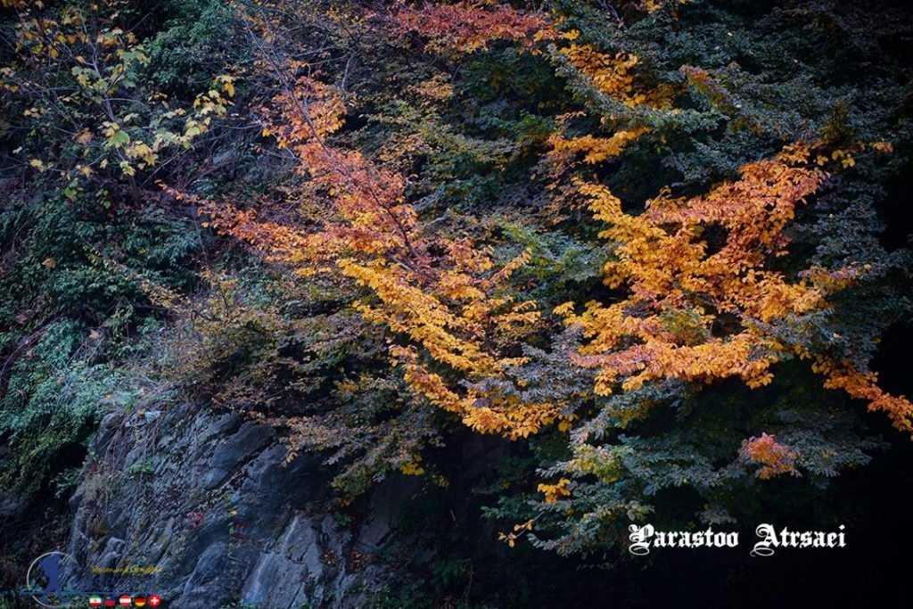 خزان درختان