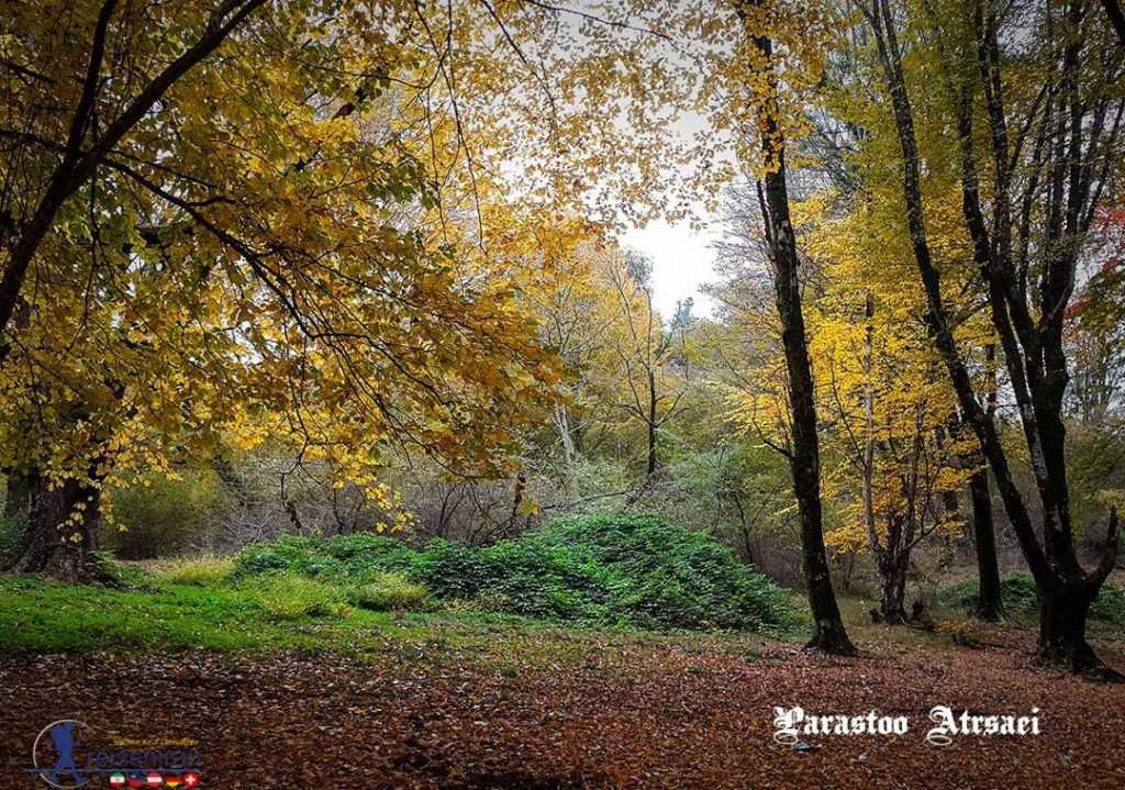پاییز جنگل ناهارخوران