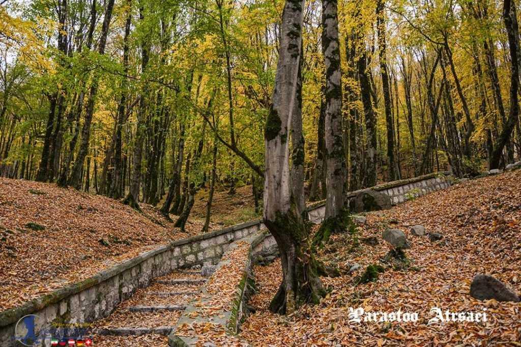 پارک جنگلی ناهارخوران گرگان