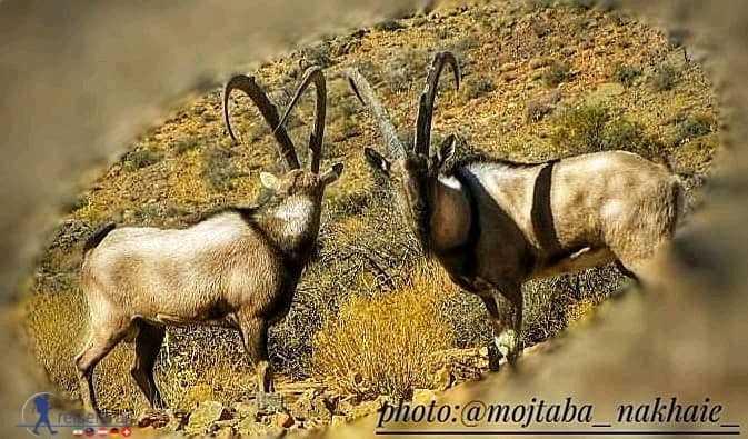 کلچه در پارک ملی بختگان