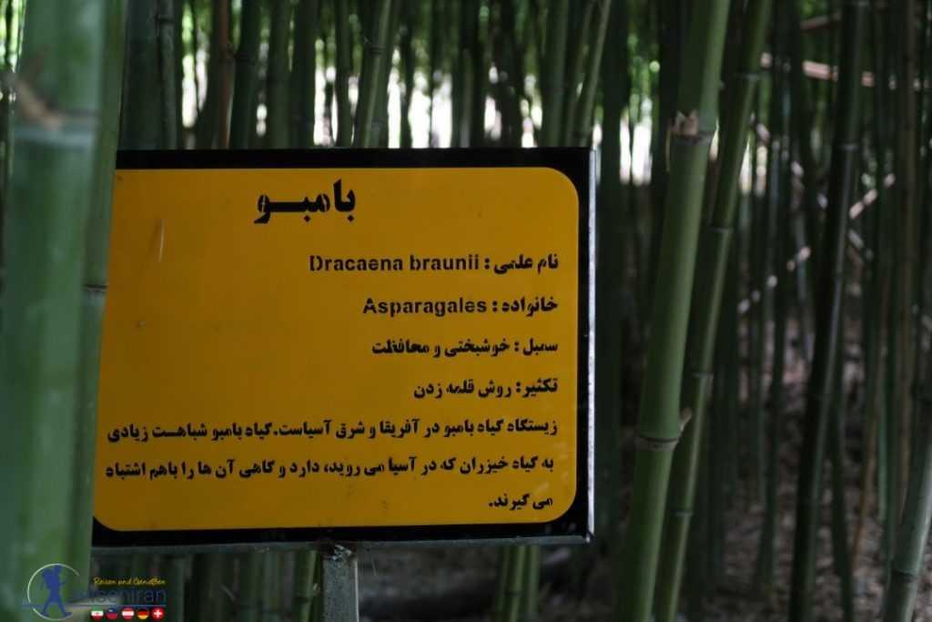 باغ بامبو رامسر