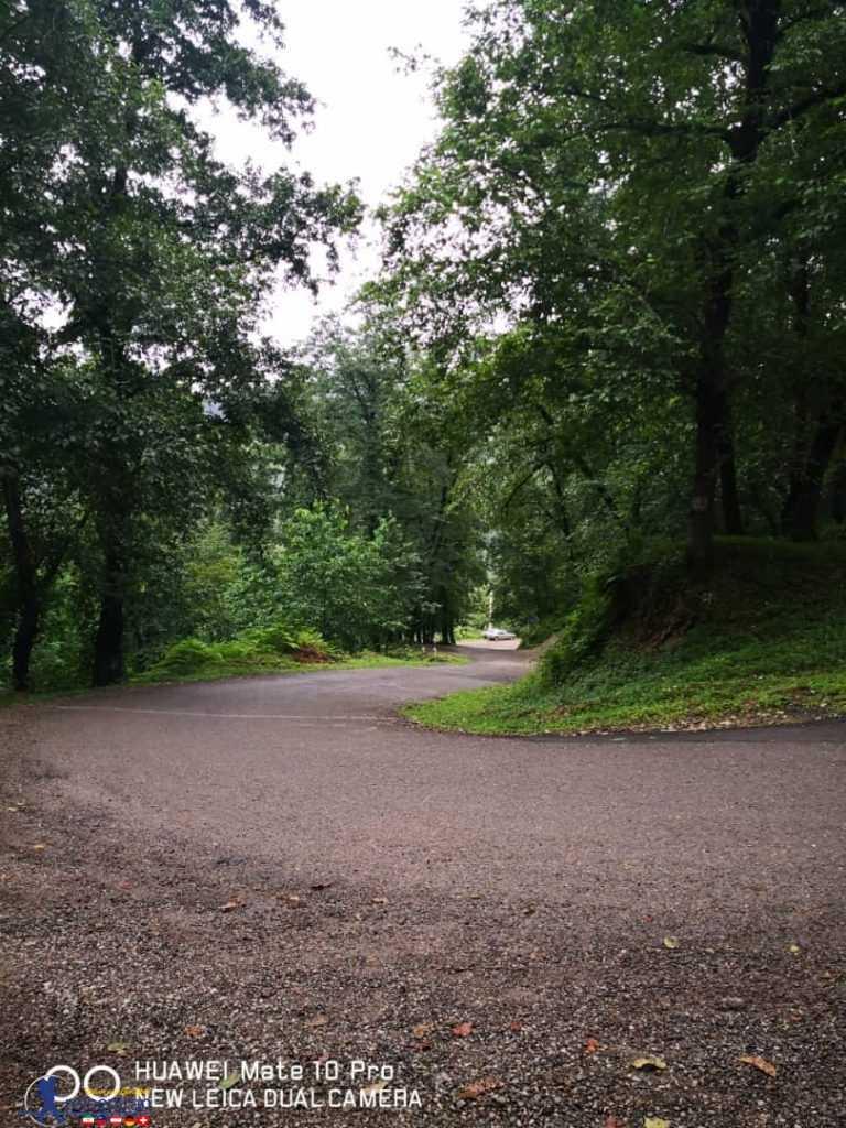 جاده جنگل دالخانی