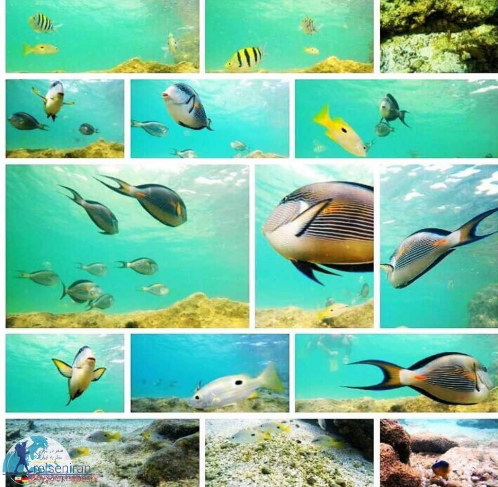ماهیان ایران