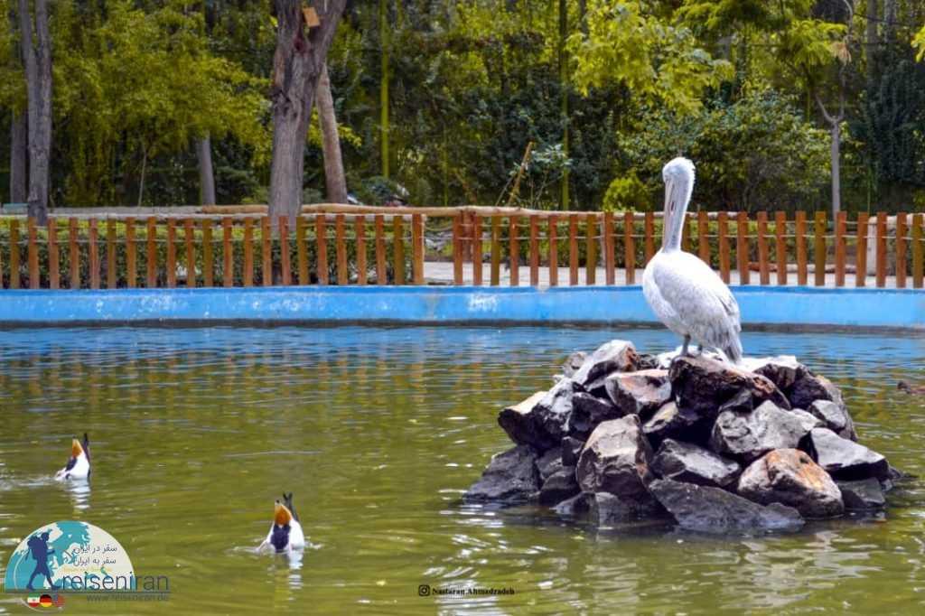 برکه باغ پرندگان اصفهان