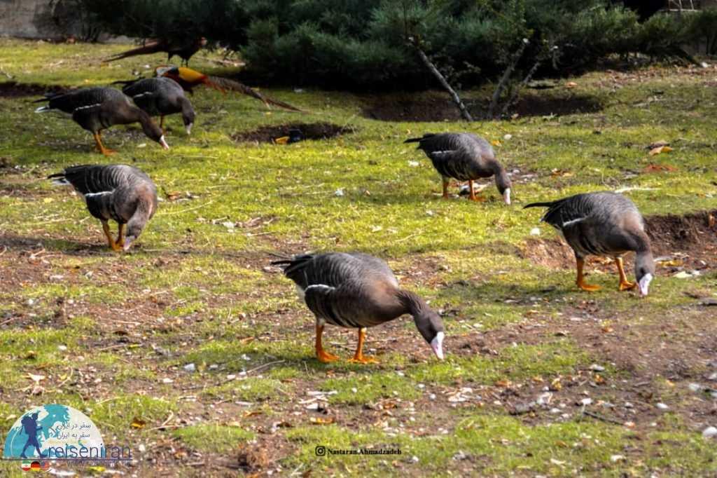 عکس باغ پرندگان اصفهان
