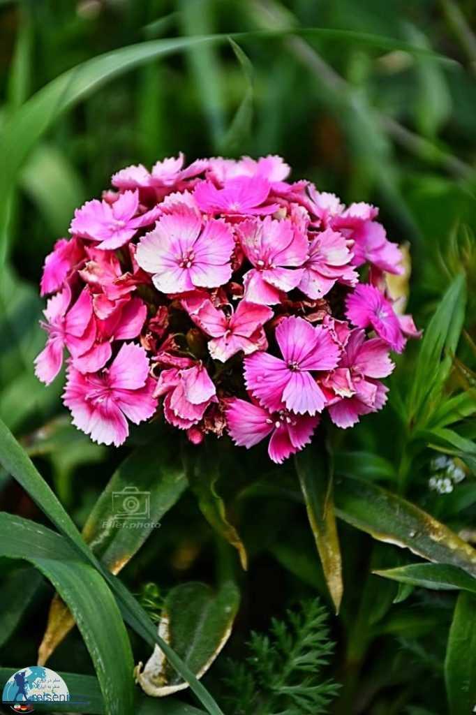 گل های زیبای باغ گلهای اصفهان