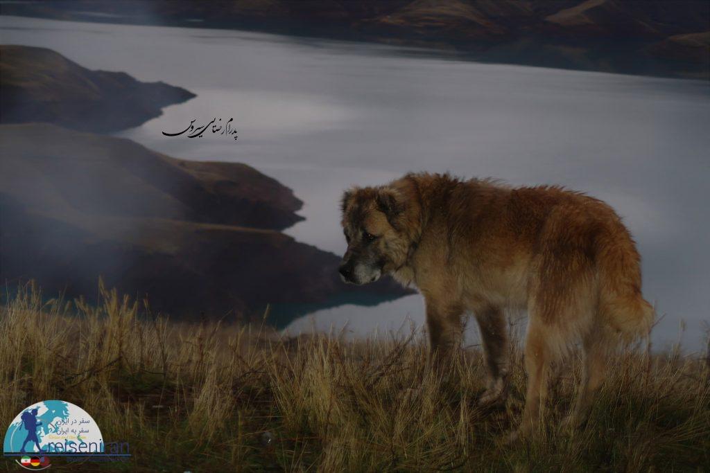 سگ در کنار دریاچه طالقان