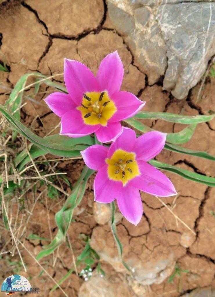 تضاد گل و خشکی زمین