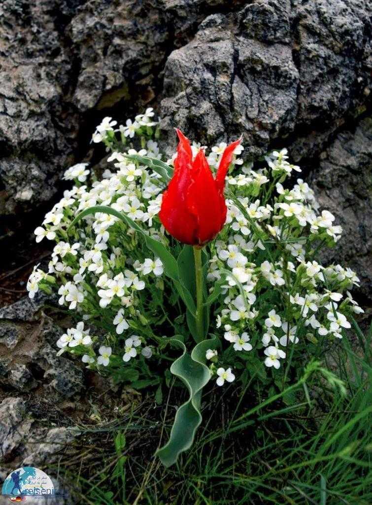 رشد مسالمت آمیز گل ها