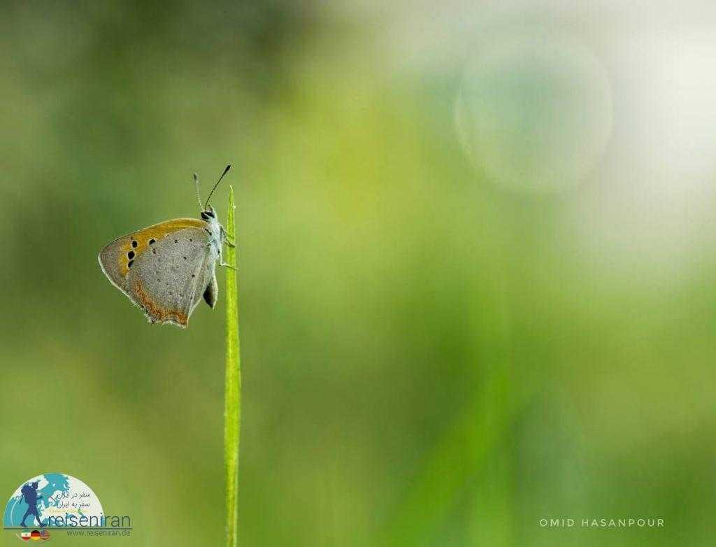 عکس پروانه ها