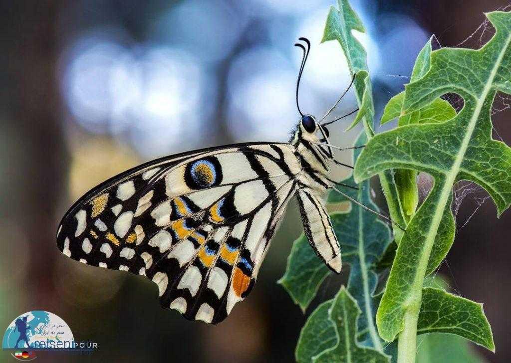 پروانه روی گیاه