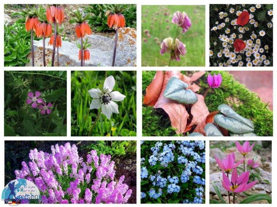 گل های ایران