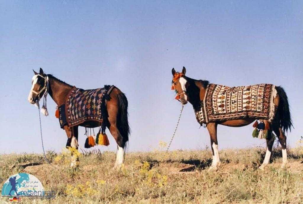 اسب دره شوری قوم قشقایی