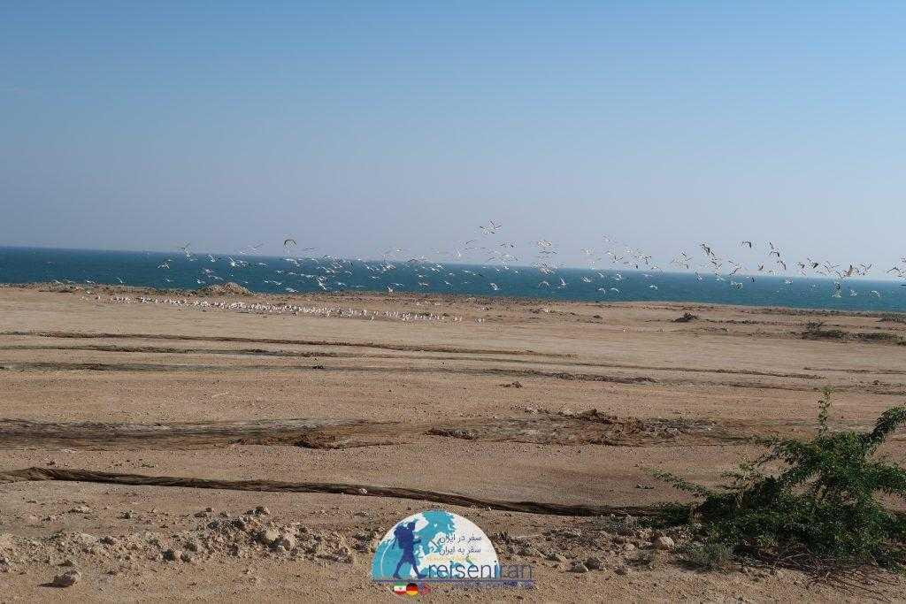 ساحل ماسه ای قشم