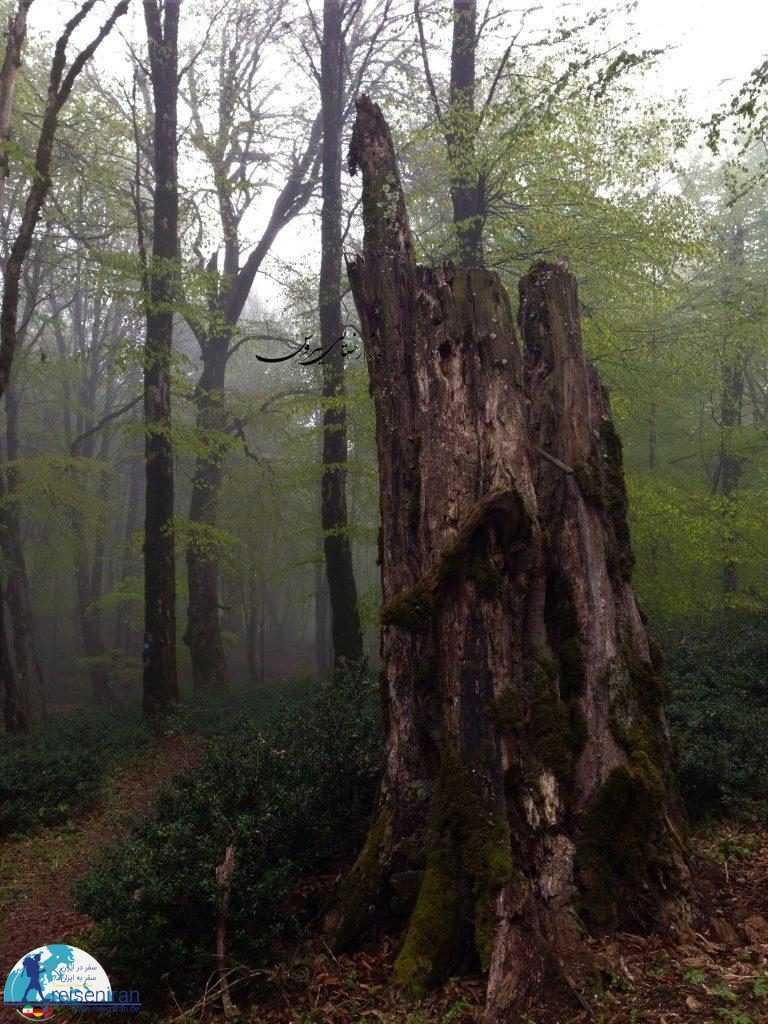 طبیعت زیبای جنگل رویایی الیمستان