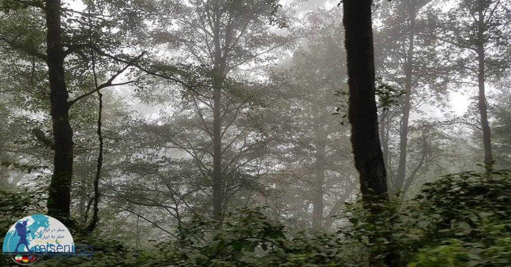 جنگل در مسیر جواهرده