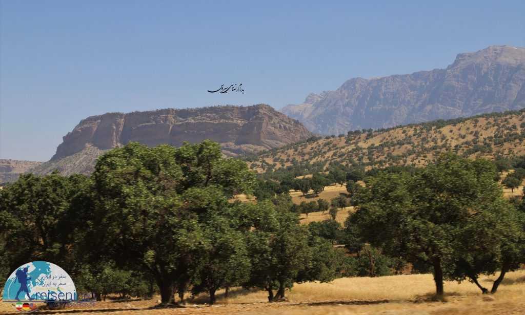 درختان رشته کوه زاگرس