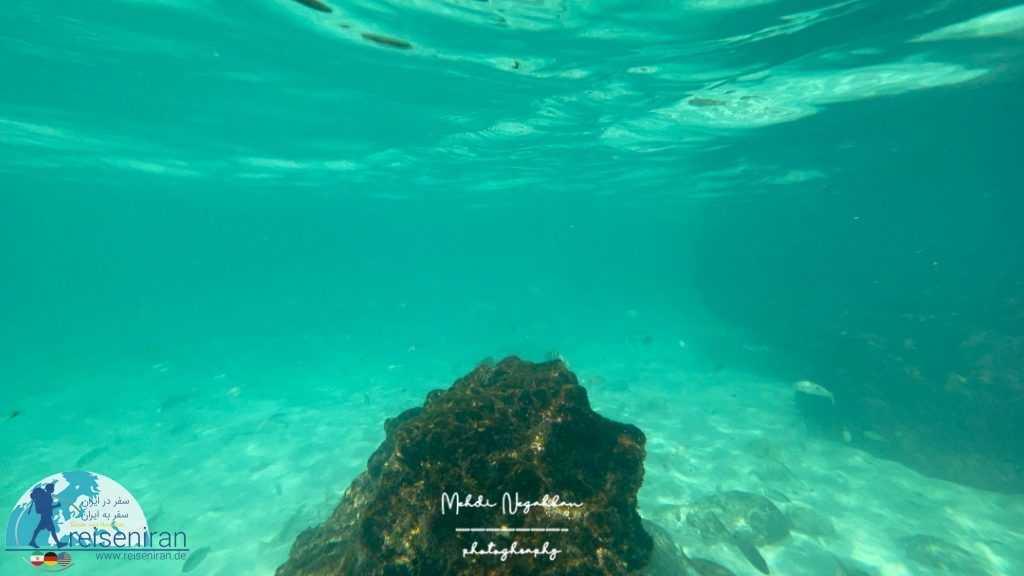 دنیای زیر آب ساحل جزیره شیدور
