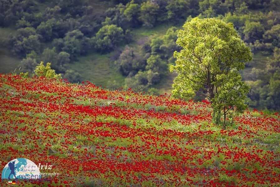 طبیعت بهاری کردستان
