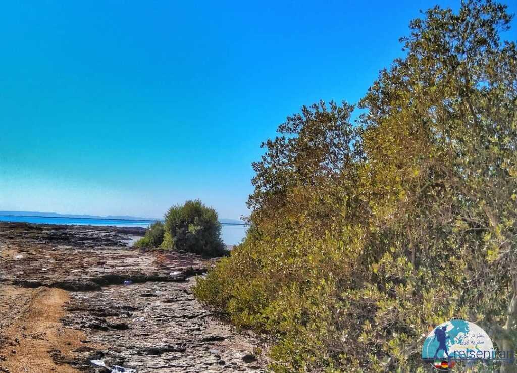 عکس جزیره شیخ اندرابی