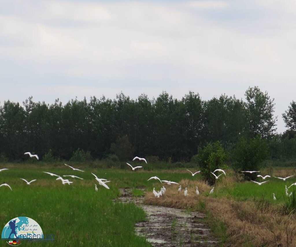 طبیعت روستا درگاه