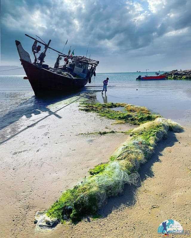 تورهای رها شده در ساحل دیر