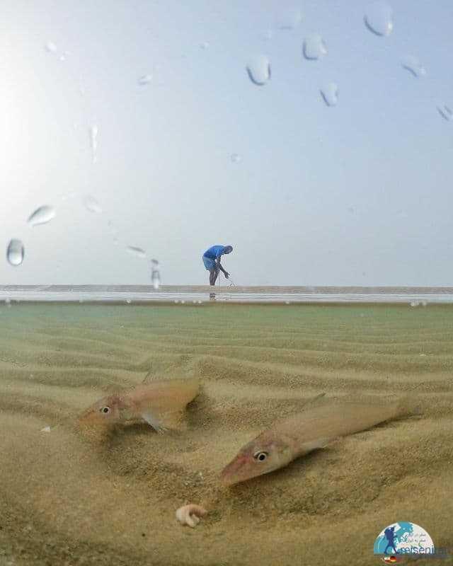 نمایی از ماهیان در ساحل دیر